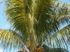 Lacaseafoule, un Gîte de la Réunion : Vue sur les palmier